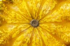 Struttura di zucca gialla fotografia stock