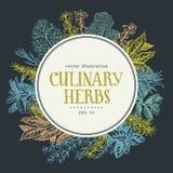 Struttura disegnata a mano con le erbe e le spezie culinarie Vector il fondo per il menu di progettazione, imballante, le ricette Fotografie Stock