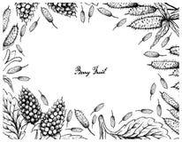 Struttura disegnata a mano della bacca di Apple e di Amora Verde Berries Fotografia Stock Libera da Diritti