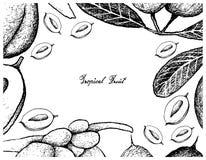 Struttura disegnata a mano di Karanda e di doppi frutti della noce di cocco illustrazione di stock