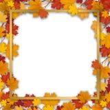 Struttura dorata nel fogliame dell'acero di autunno Immagine Stock