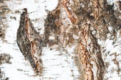 Struttura E Col passare del tempo, la pittura pelata abbia tonalit? fotografia stock libera da diritti