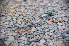 Struttura e fondo della pietra bassa Struttura Lithoidal Fotografia Stock