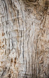 Struttura e fondo di legno della corteccia di albero fotografia stock