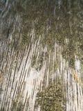 Struttura e fondo di legno della parete per comporre immagine stock