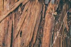 Struttura e fondo di legno scheggiati Vista del primo piano di struttura di legno della scheggia Struttura e fondo astratti per i Fotografia Stock Libera da Diritti