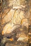 Struttura e modello della roccia dell'arenaria immagini stock