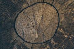 Struttura e priorità bassa di legno Tagli il fondo del tronco di albero nello stile d'annata Fine del tronco di albero su Macro v immagini stock libere da diritti