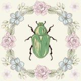 Struttura e scarabeo floreali fotografie stock libere da diritti