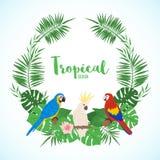 Struttura esotica con le foglie e gli uccelli tropicali royalty illustrazione gratis
