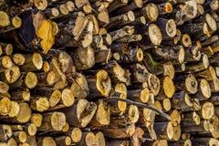 Struttura fatta da una pila di legno fresco del taglio Fotografia Stock Libera da Diritti