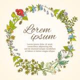Struttura floreale con il modello disegnato a mano dei fiori selvaggi per la cartolina d'auguri dell'invito e di nozze royalty illustrazione gratis