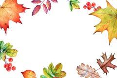 Struttura floreale con le foglie e le bacche di autunno dell'acquerello immagini stock libere da diritti