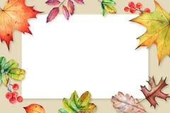 Struttura floreale con le foglie e le bacche di autunno dell'acquerello immagine stock