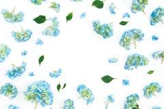 Struttura floreale dei fiori e delle foglie dell'ortensia su fondo bianco Disposizione piana, vista superiore Priorità bassa flor fotografie stock