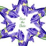 Struttura floreale dell'acquerello dei fiori porpora dell'iride Fotografia Stock Libera da Diritti