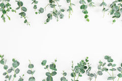 Struttura floreale delle foglie dell'eucalyptus isolate su fondo bianco Disposizione piana, vista superiore immagine stock
