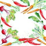 Struttura floreale di una carota, dei ravanelli, delle barbabietole e del peperoncino Immagini Stock Libere da Diritti