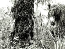 Struttura in Florida Fotografie Stock