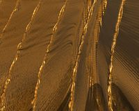 Struttura/fondo dell'oro fotografia stock libera da diritti