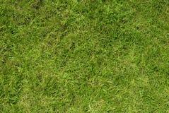 Struttura fresca dell'erba Immagini Stock