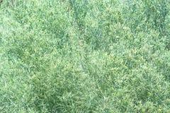 Struttura fresca dell'erba asciutta nel mezzo del Th del giorno soleggiato fotografia stock