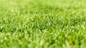 Struttura fresca dell'erba verde Fotografia Stock Libera da Diritti