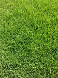 Struttura fresca dell'erba verde Fotografia Stock