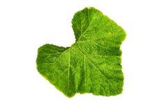 Struttura fresca e verde del giardino e tropicale dell'albero della foglia Fotografie Stock Libere da Diritti