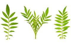 Struttura fresca e verde del giardino e tropicale dell'albero della foglia Immagini Stock Libere da Diritti