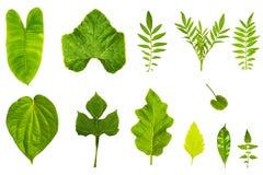 Struttura fresca e verde del giardino e tropicale dell'albero della foglia Fotografia Stock Libera da Diritti