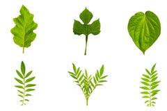 Struttura fresca e verde del giardino e tropicale dell'albero della foglia Prateria verde Immagine Stock