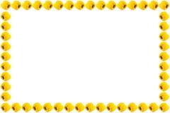 Struttura gialla del capsico Fotografia Stock Libera da Diritti