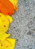 Struttura gialla della foglia di autunno Fotografia Stock Libera da Diritti