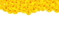 Struttura gialla della gerbera Fotografia Stock
