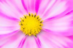 Struttura i bei fiori nello stile morbido immagini stock