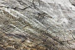 Struttura, l'albero Immagini Stock