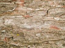 Struttura a macroistruzione - alberi - corteccia Immagini Stock