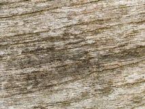 Struttura a macroistruzione - legno - granulo Fotografie Stock
