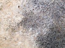Struttura a macroistruzione - pietra - roccia chiazzata fotografie stock libere da diritti