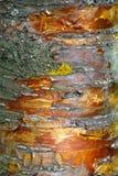 Struttura, modello Corteccia dell'albero l'intensità del suo relati di tono immagini stock libere da diritti
