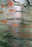 Struttura, modello Corteccia dell'albero l'intensità del suo relati di tono immagini stock