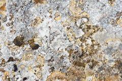Struttura Moldy della roccia fotografia stock libera da diritti