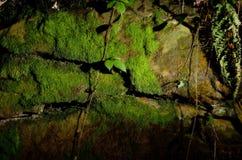 Struttura muscosa della roccia Fotografie Stock Libere da Diritti