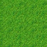 Struttura naturale con molte foglie del trifoglio Immagini Stock