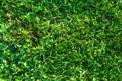 Struttura naturale del fondo della superficie dell'erba verde del primo piano Immagine Stock