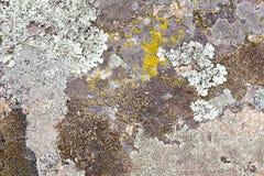 Struttura naturale di muschio Fotografia Stock