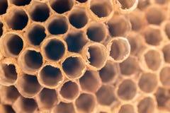 Struttura naturale di un nido della vespa dettagliatamente immagini stock libere da diritti