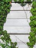 Struttura naturale - edera selvatica intrecciata parete di legno fotografie stock libere da diritti