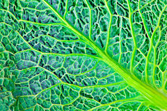 Struttura naturale verde Immagine Stock Libera da Diritti
